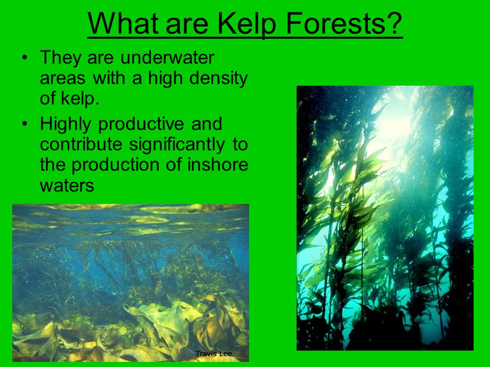 What are Kelp Forests. They are underwater areas with a high density of kelp.