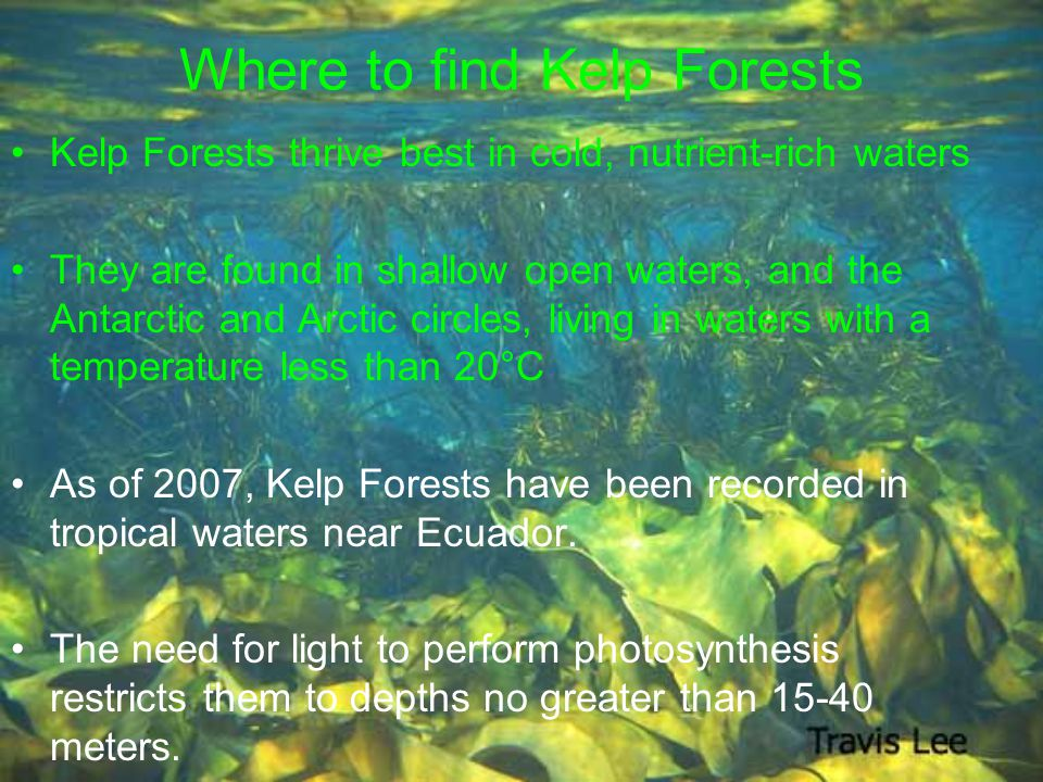 Where to find Kelp Forests Kelp Forests thrive best in cold, nutrient-rich waters They are found in shallow open waters, and the Antarctic and Arctic circles, living in waters with a temperature less than 20°C As of 2007, Kelp Forests have been recorded in tropical waters near Ecuador.