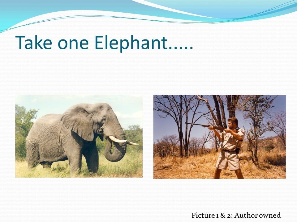 Take one Elephant..... Picture 1 & 2: Author owned