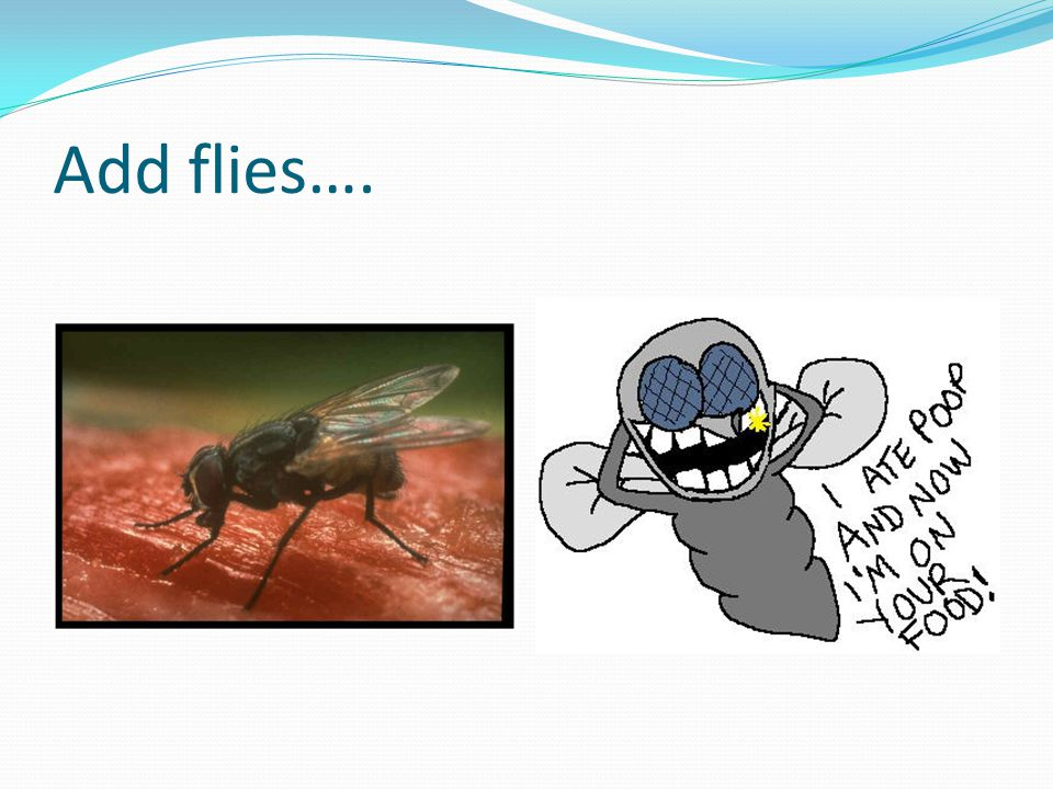 Add flies….