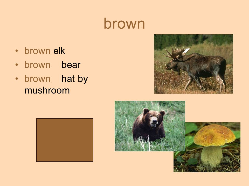 brown brown elk brown bear brown hat by mushroom