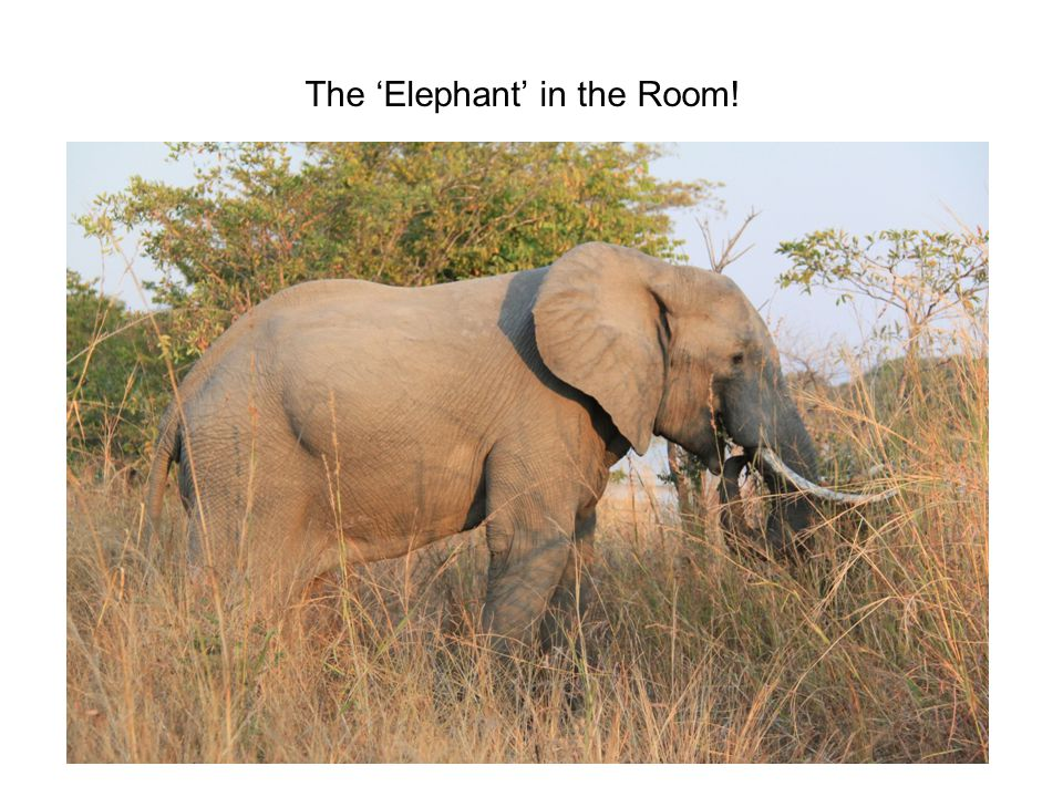 The 'Elephant' in the Room!