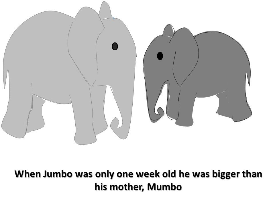 When Jumbo was only one week old he was bigger than his mother, Mumbo