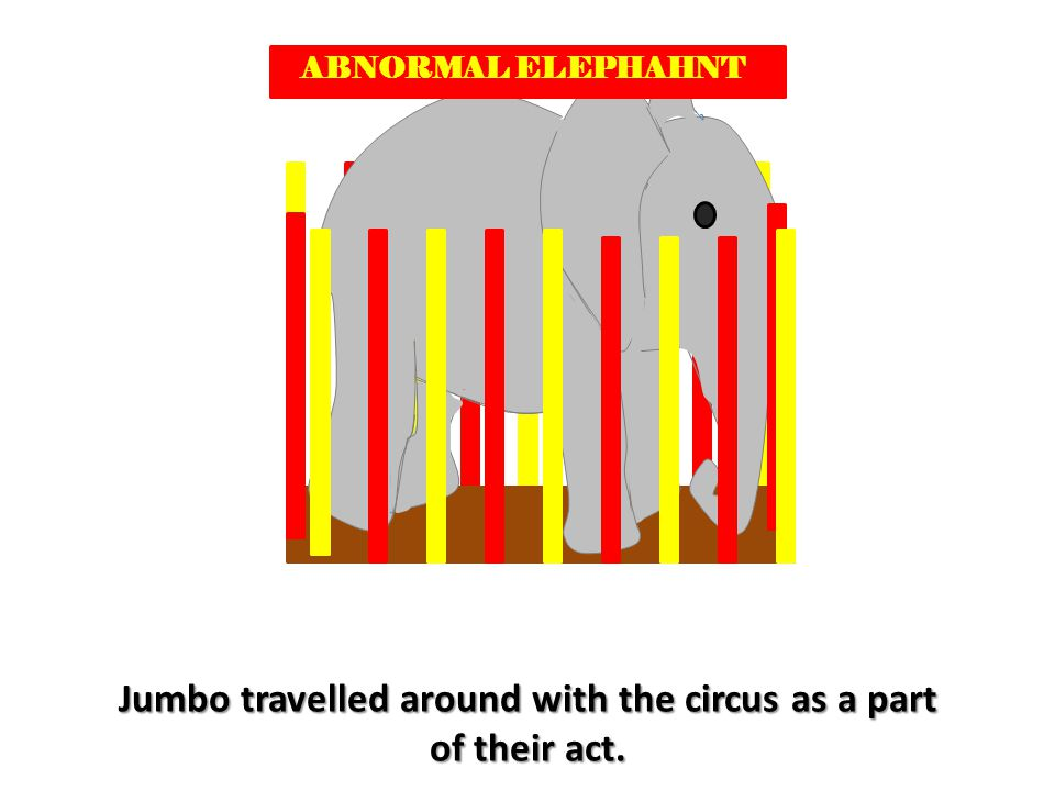 ABNORMAL ELEPHAHNT Jumbo travelled around with the circus as a part of their act.