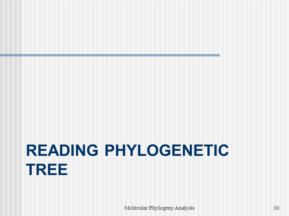 READING PHYLOGENETIC TREE Molecular Phylogeny Analysis30
