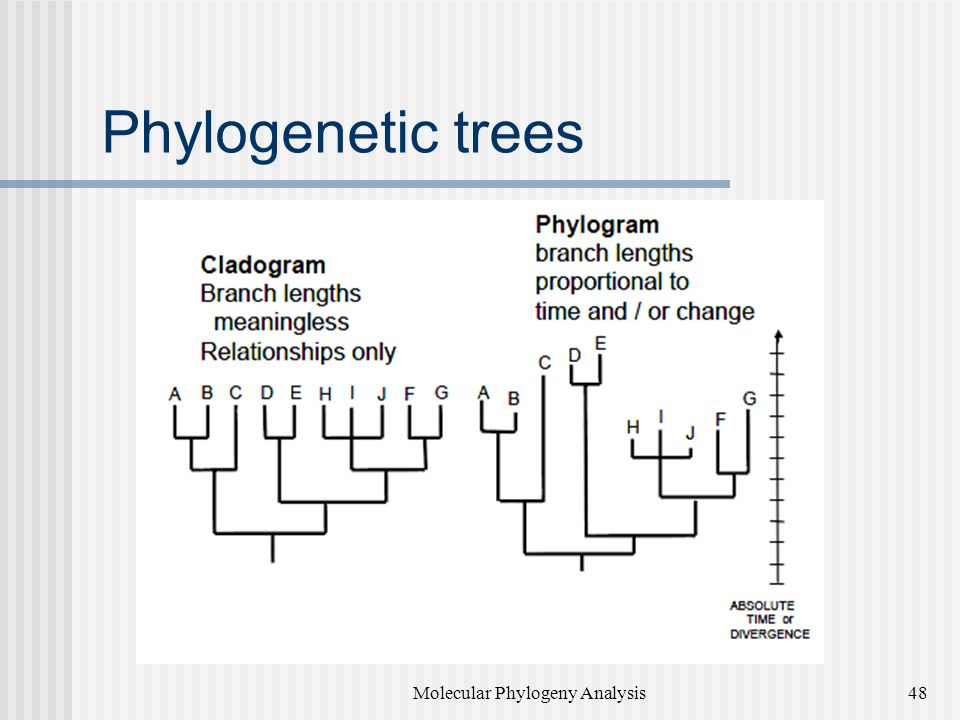 Phylogenetic trees Molecular Phylogeny Analysis48