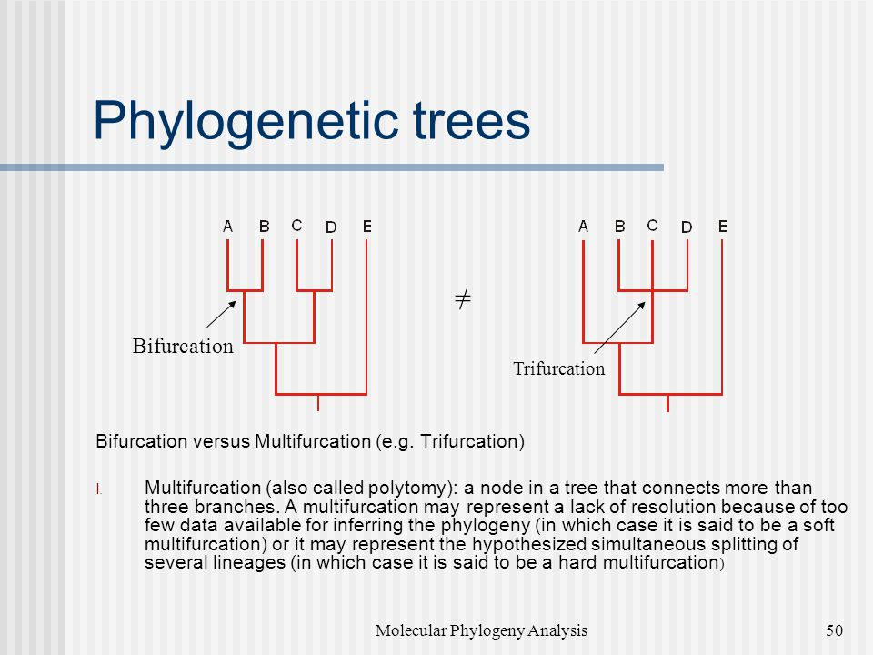 Phylogenetic trees Bifurcation versus Multifurcation (e.g. Trifurcation)  Multifurcation (also called polytomy): a node in a tree that connects more