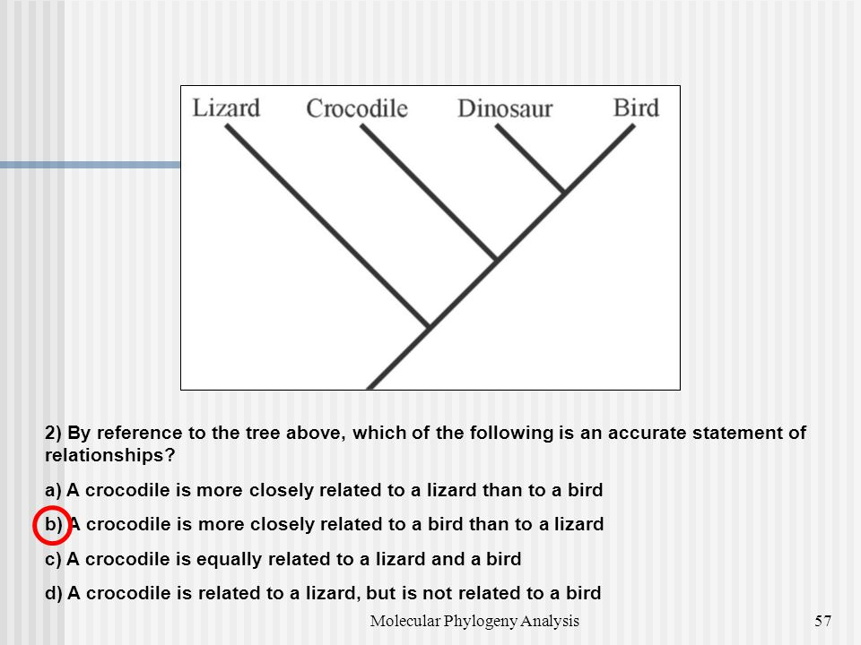 2) By reference to the tree above, which of the following is an accurate statement of relationships.