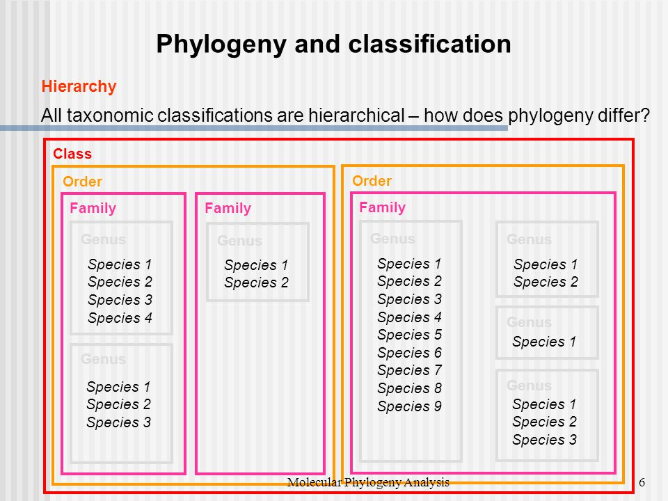 Phylogeny and classification Hierarchy All taxonomic classifications are hierarchical – how does phylogeny differ.