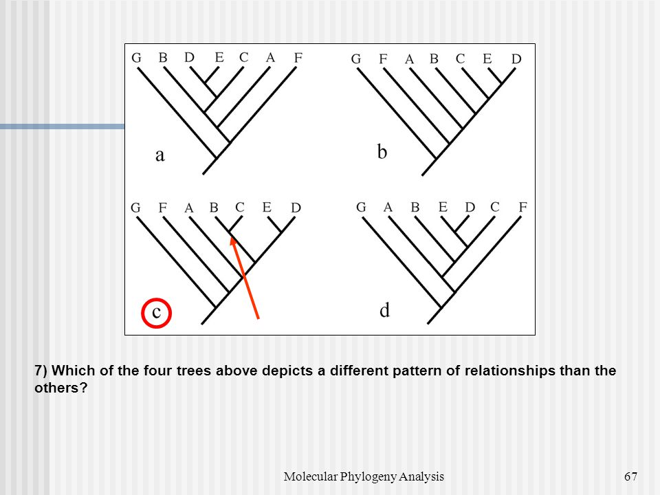 7) Which of the four trees above depicts a different pattern of relationships than the others.