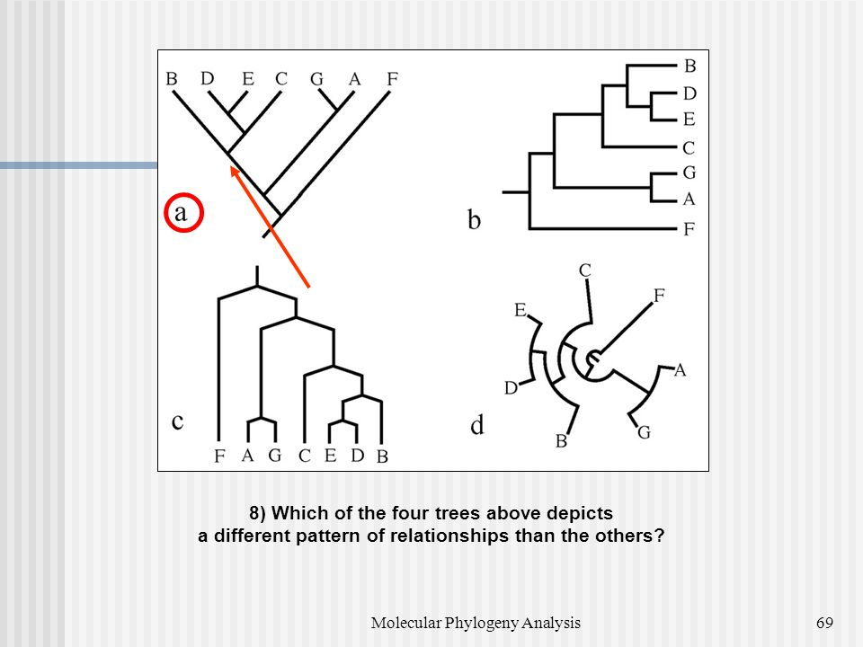 8) Which of the four trees above depicts a different pattern of relationships than the others.