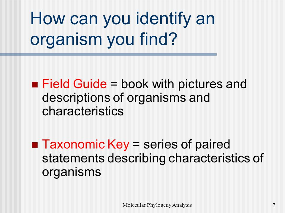 How can you identify an organism you find.
