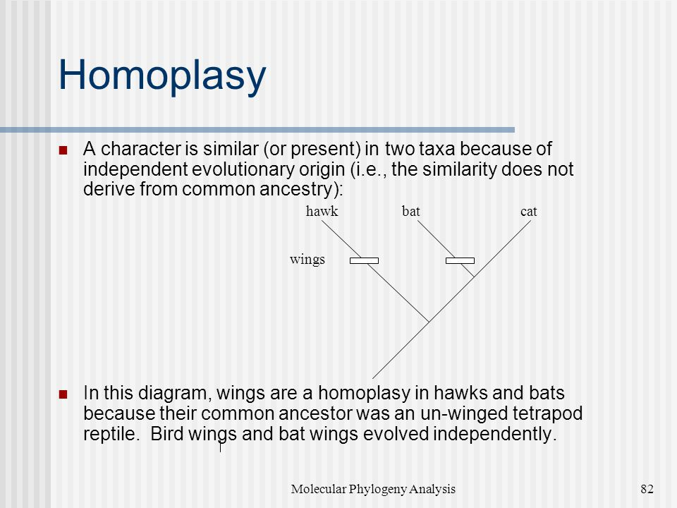 Homoplasy A character is similar (or present) in two taxa because of independent evolutionary origin (i.e., the similarity does not derive from common ancestry): In this diagram, wings are a homoplasy in hawks and bats because their common ancestor was an un-winged tetrapod reptile.