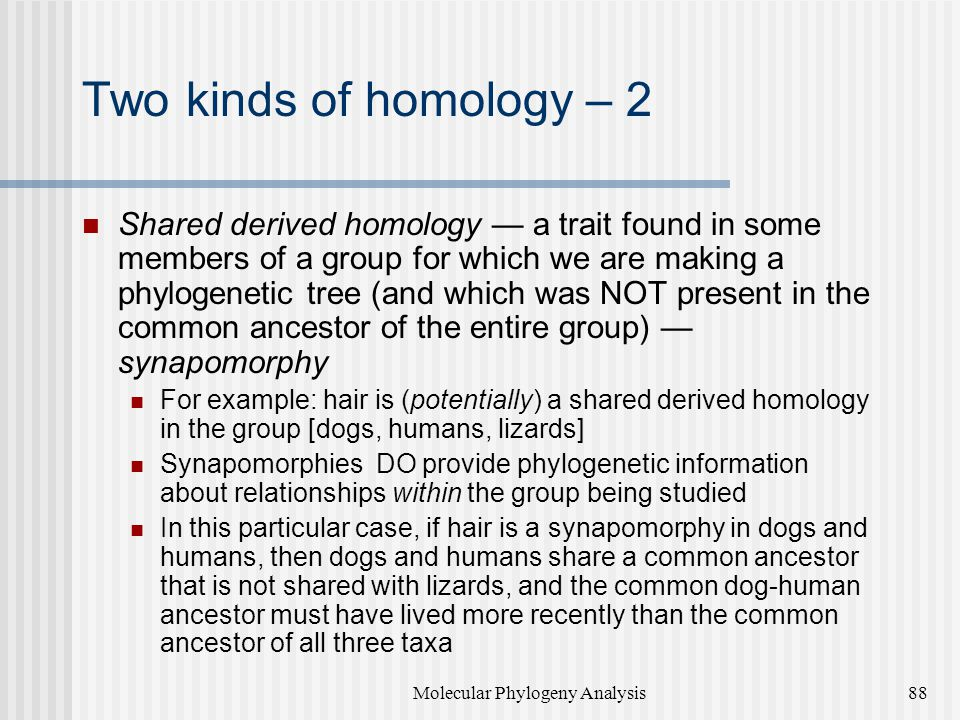 Two kinds of homology – 2 Shared derived homology — a trait found in some members of a group for which we are making a phylogenetic tree (and which was NOT present in the common ancestor of the entire group) — synapomorphy For example: hair is (potentially) a shared derived homology in the group [dogs, humans, lizards] Synapomorphies DO provide phylogenetic information about relationships within the group being studied In this particular case, if hair is a synapomorphy in dogs and humans, then dogs and humans share a common ancestor that is not shared with lizards, and the common dog-human ancestor must have lived more recently than the common ancestor of all three taxa Molecular Phylogeny Analysis88