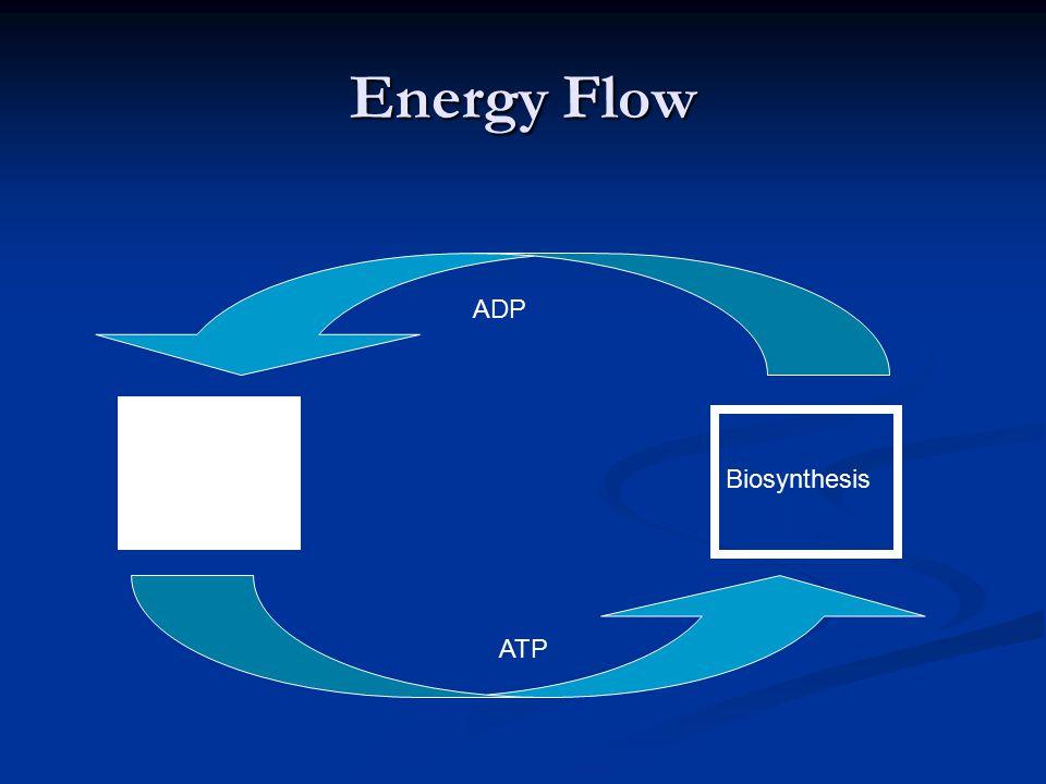 Energy Flow Catabolism Biosynthesis ADP ATP