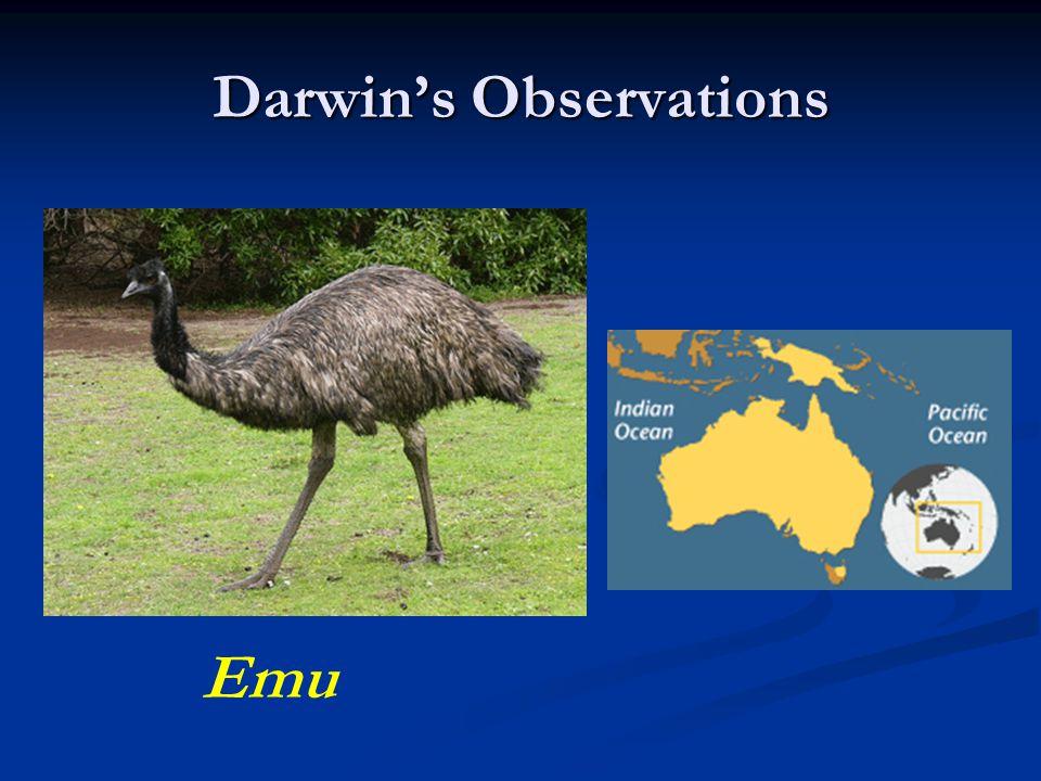 Darwin's Observations Emu