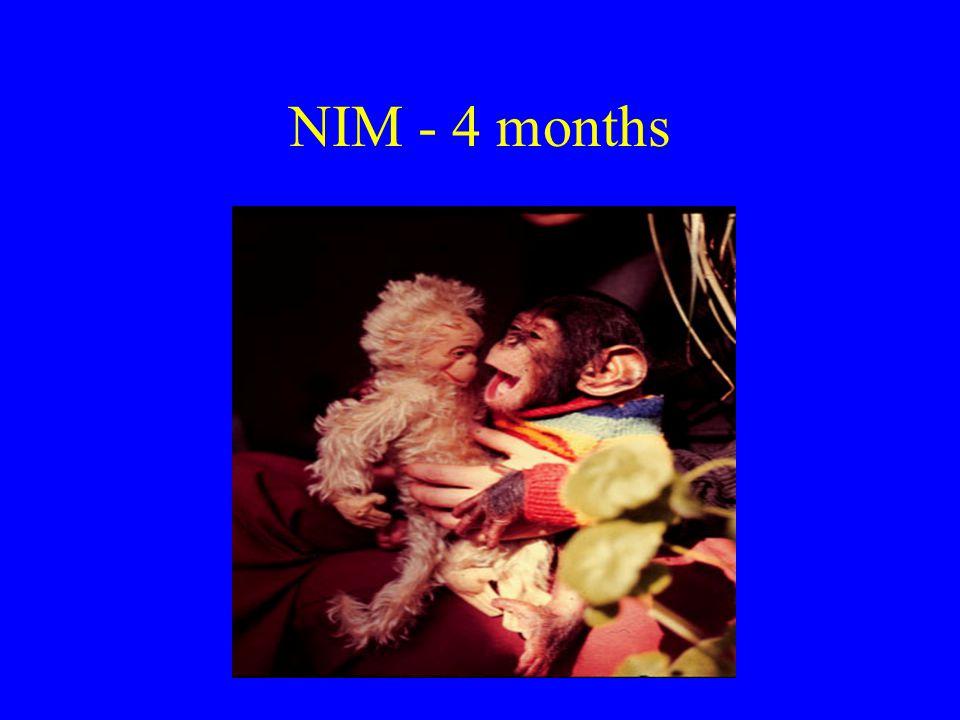 NIM - 4 months