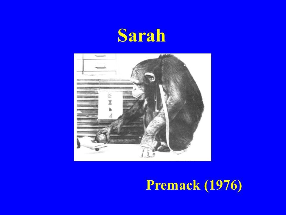 Sarah Premack (1976)