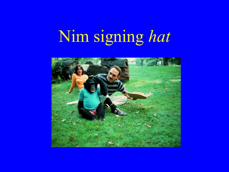 Nim signing hat