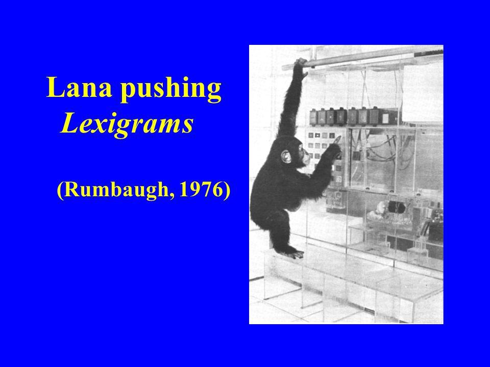 Lana pushing Lexigrams (Rumbaugh, 1976)