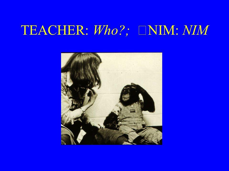 TEACHER: Who ; NIM: NIM