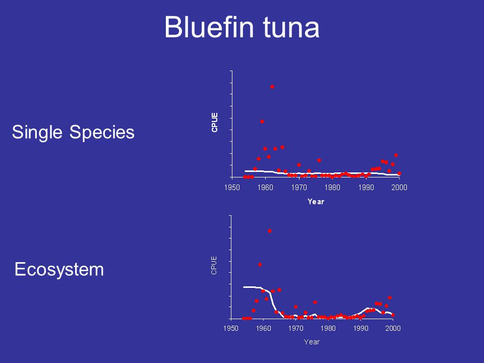 Bluefin tuna Single Species Ecosystem