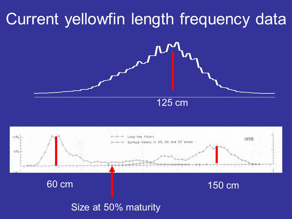 60 cm 150 cm Size at 50% maturity Current yellowfin length frequency data 125 cm