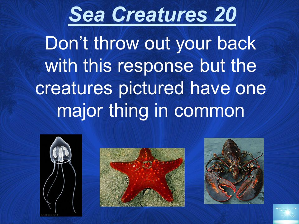 Sea Creatures 20 Don't throw out your back with this response but the creatures pictured have one major thing in common