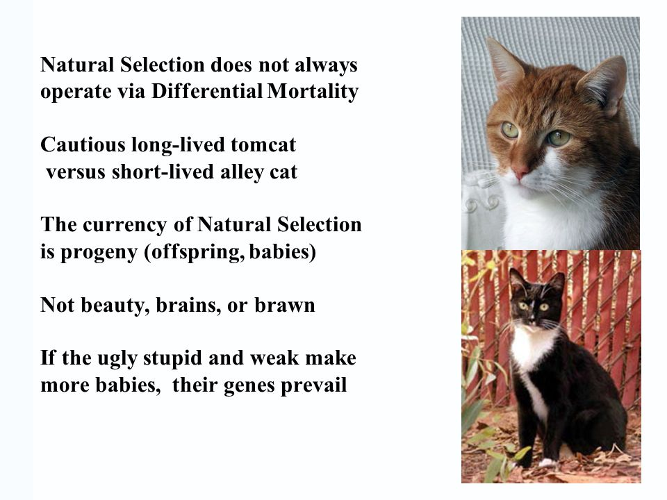 Natural Selection does not always operate via Differential Mortality Cautious long-lived tomcat versus short-lived alley cat The currency of Natural S