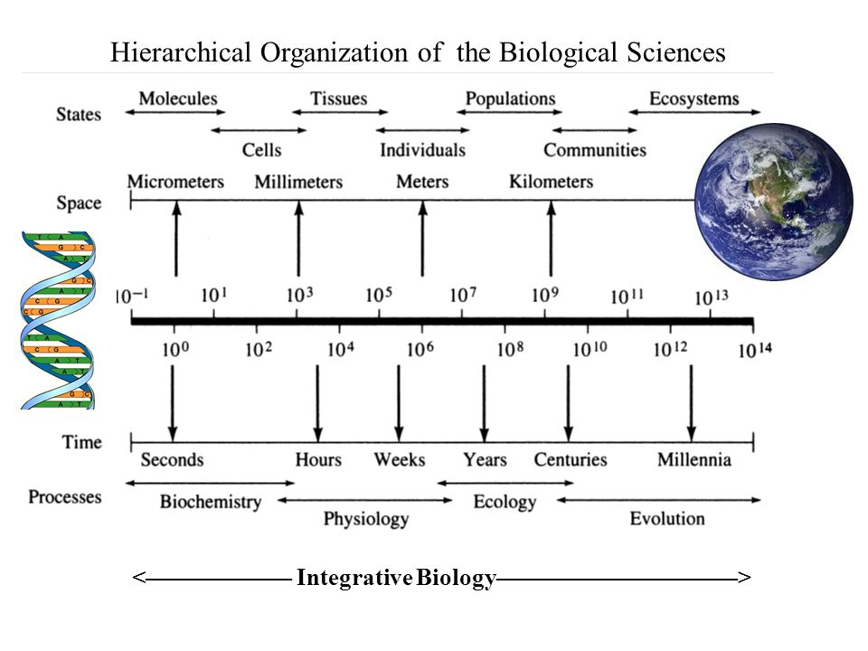 Hierarchical Organization of the Biological Sciences