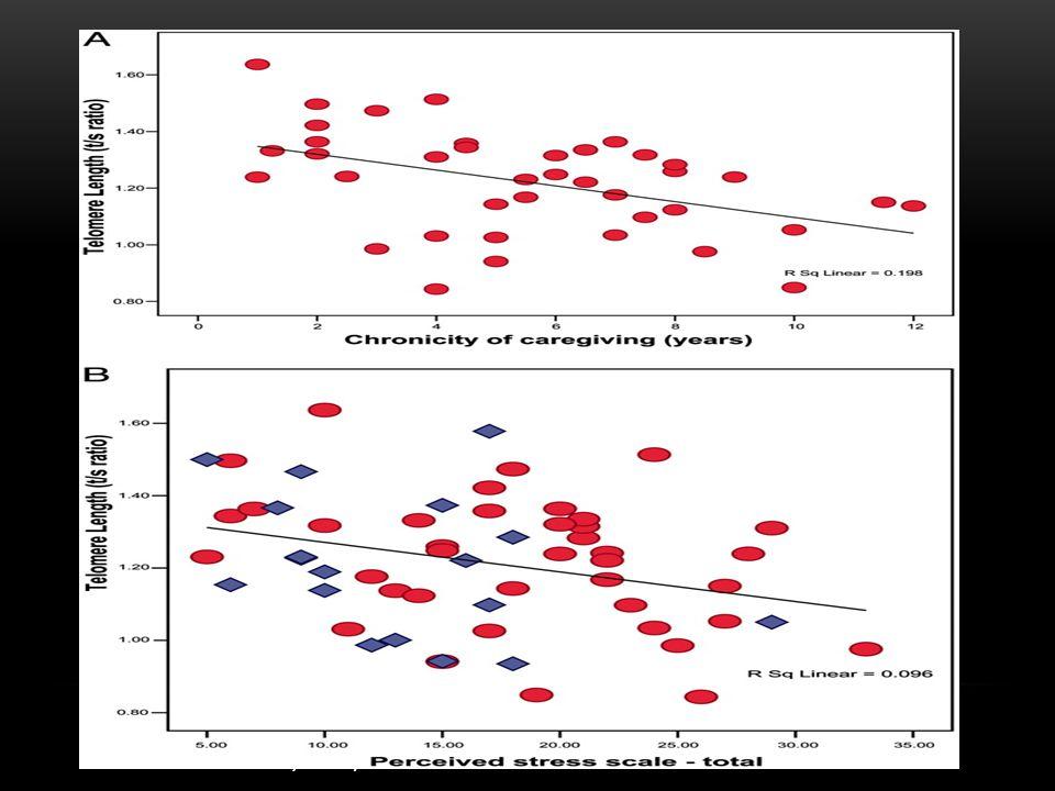 STRESS & TELOMERE DEGRADATION Epel, E.S. et al. (2004).