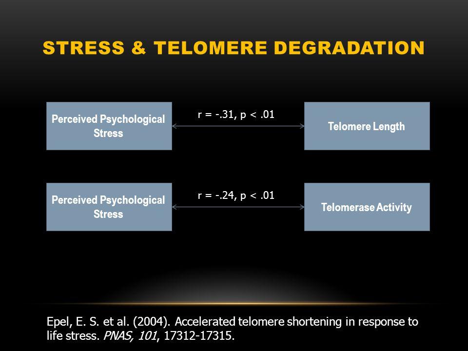 STRESS & TELOMERE DEGRADATION Epel, E. S. et al.