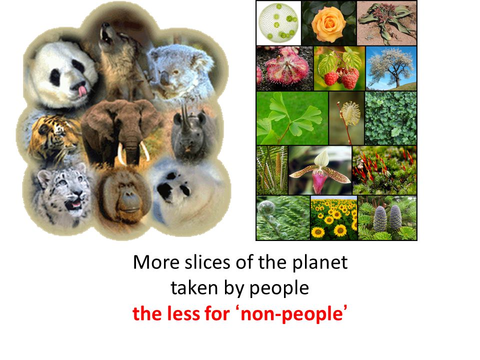 More slices of the planet taken by people the less for 'non-people'