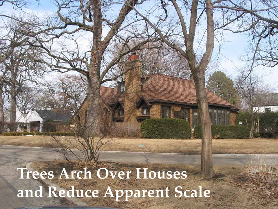 Trees Arch Over Houses and Reduce Apparent Scale