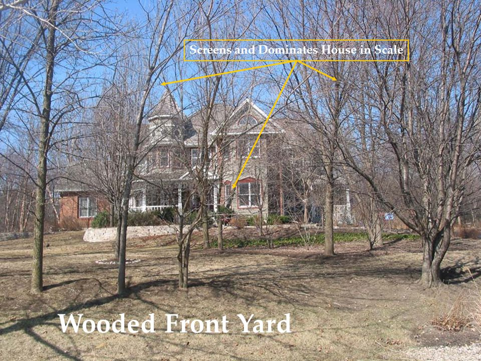 Wooded Front Yard Screens and Dominates House in Scale