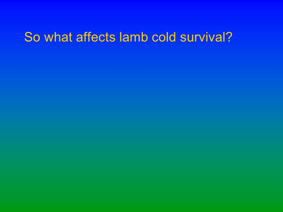 So what affects lamb cold survival?