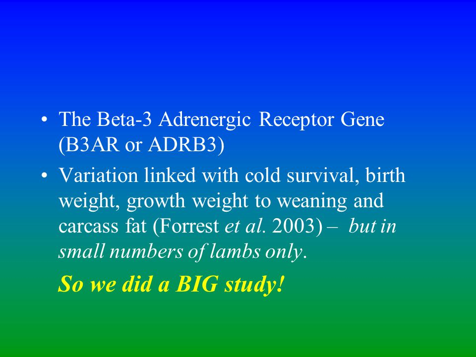The Beta-3 Adrenergic Receptor Gene (B3AR or ADRB3) Variation linked with cold survival, birth weight, growth weight to weaning and carcass fat (Forrest et al.