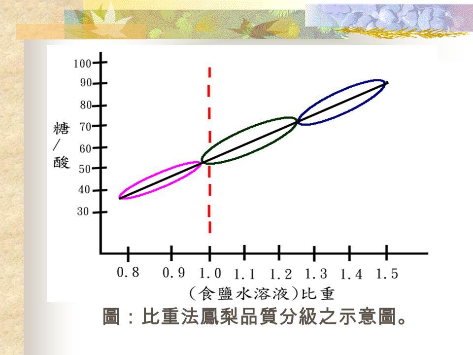 圖:比重法鳳梨品質分級之示意圖。