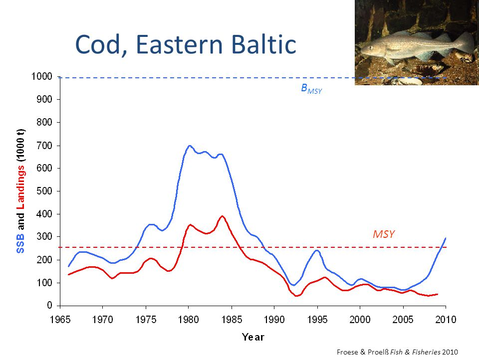 Cod, Eastern Baltic B MSY MSY Froese & Proelß Fish & Fisheries 2010