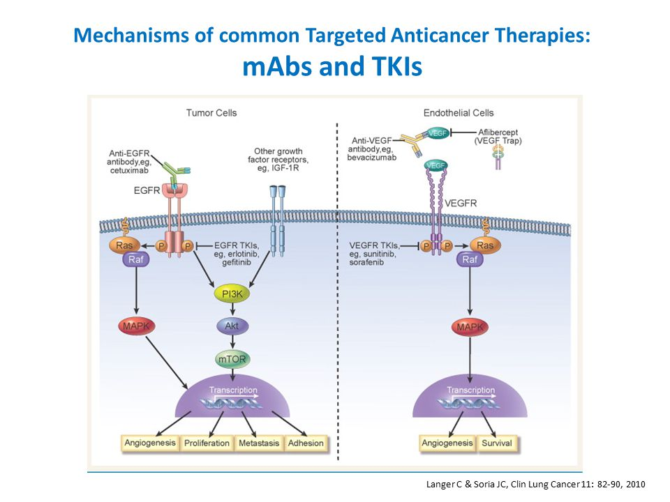 Langer C & Soria JC, Clin Lung Cancer 11: 82-90, 2010 Mechanisms of common Targeted Anticancer Therapies: mAbs and TKIs
