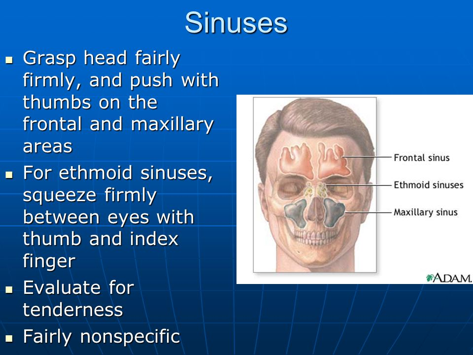 Sinuses Grasp head fairly firmly, and push with thumbs on the frontal and maxillary areas Grasp head fairly firmly, and push with thumbs on the frontal and maxillary areas For ethmoid sinuses, squeeze firmly between eyes with thumb and index finger For ethmoid sinuses, squeeze firmly between eyes with thumb and index finger Evaluate for tenderness Evaluate for tenderness Fairly nonspecific Fairly nonspecific