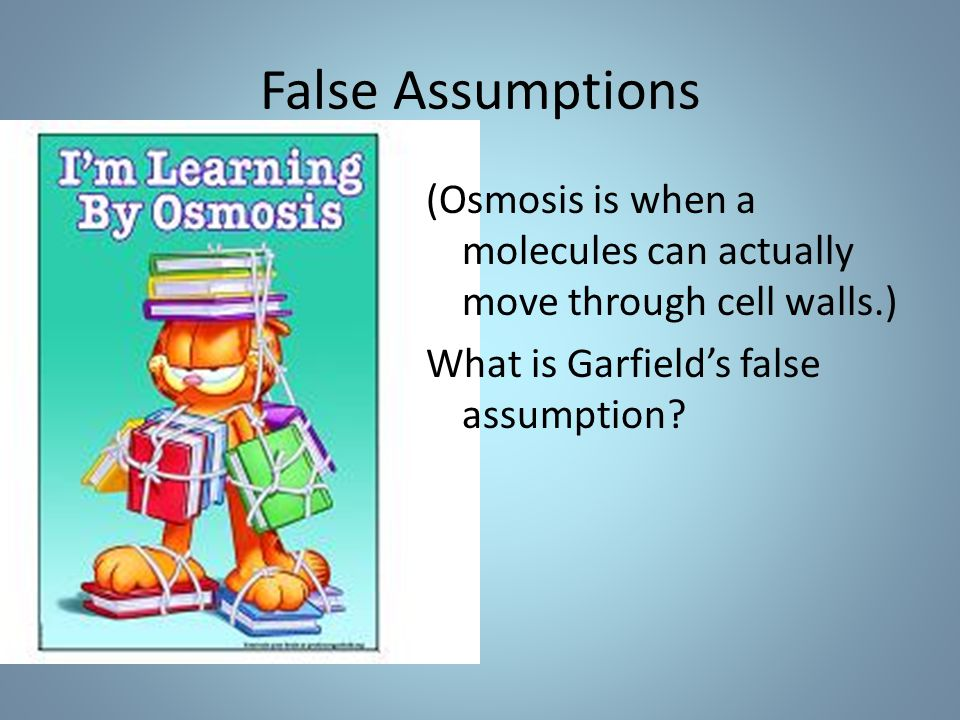 False Assumptions (Osmosis is when a molecules can actually move through cell walls.) What is Garfield's false assumption?