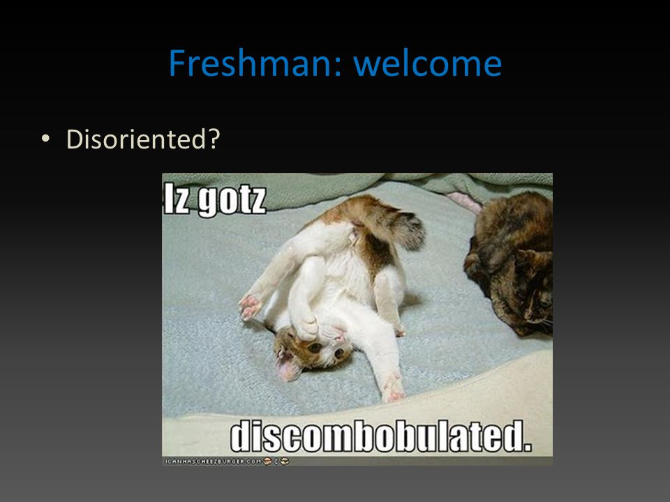 Freshman: welcome Disoriented?