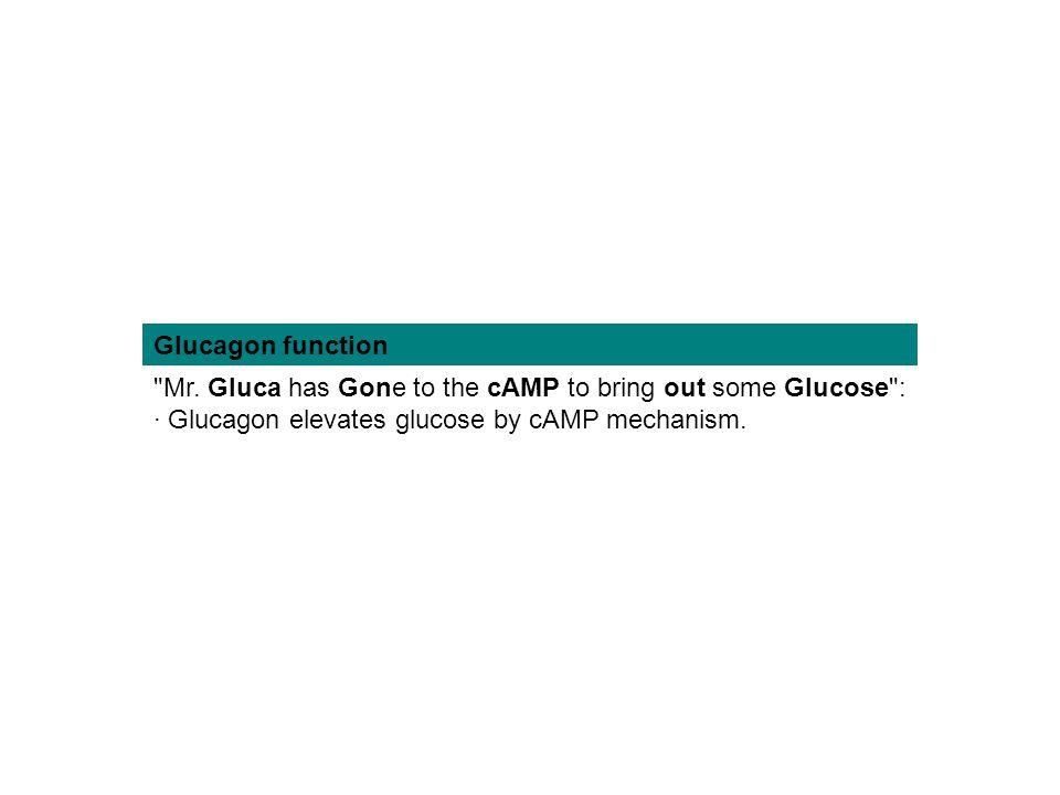 Glucagon function