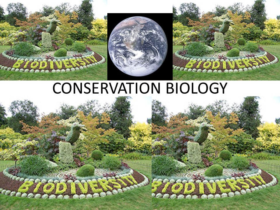 – A GOAL-ORIENTED SCIENCE THAT SEEKS TO COUNTER THE BIODIVERSITY CRISIS A RAPID DECREASE IN EARTH'S GREAT VARIETY OF LIFE THERE ARE 3 MAJOR THREATS TO BIODIVERSITY – H______________ D_______________ – I_______________ S_______________ – OVER________________