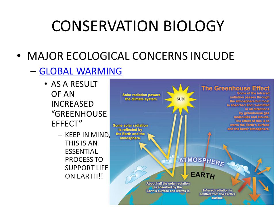 CONSERVATION BIOLOGY MAJOR ECOLOGICAL CONCERNS INCLUDE – BIOLOGICAL MAGNIFICATION (BIO- MAGNIFICATION) THE BIOMASS AT ANY GIVEN TROPHIC LEVEL IS PRODUCED FROM A MUCH LARGER TOXIN- CONTAINING BIOMASSS INGESTED FROM THE LEVEL BELOW