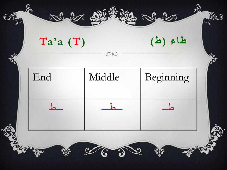 Ta'a (T) طاء ( ط ) EndMiddleBeginning ـــطـــطـــطــ