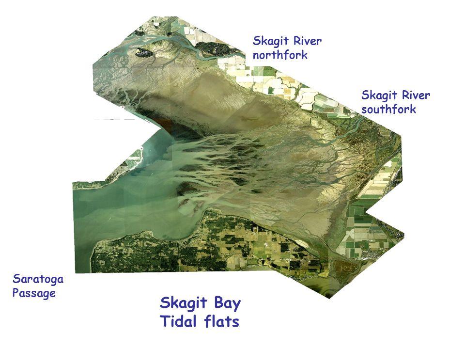 Skagit Bay Tidal flats Saratoga Passage Skagit River northfork Skagit River southfork