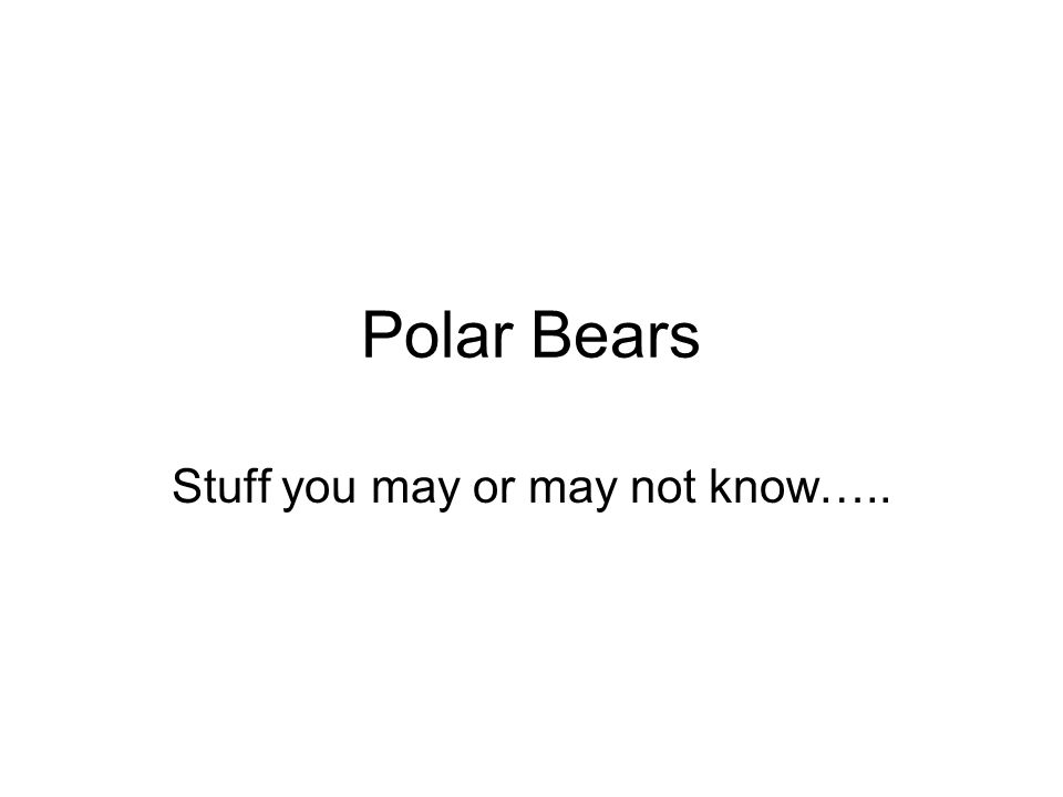 Polar Bears Stuff you may or may not know…..