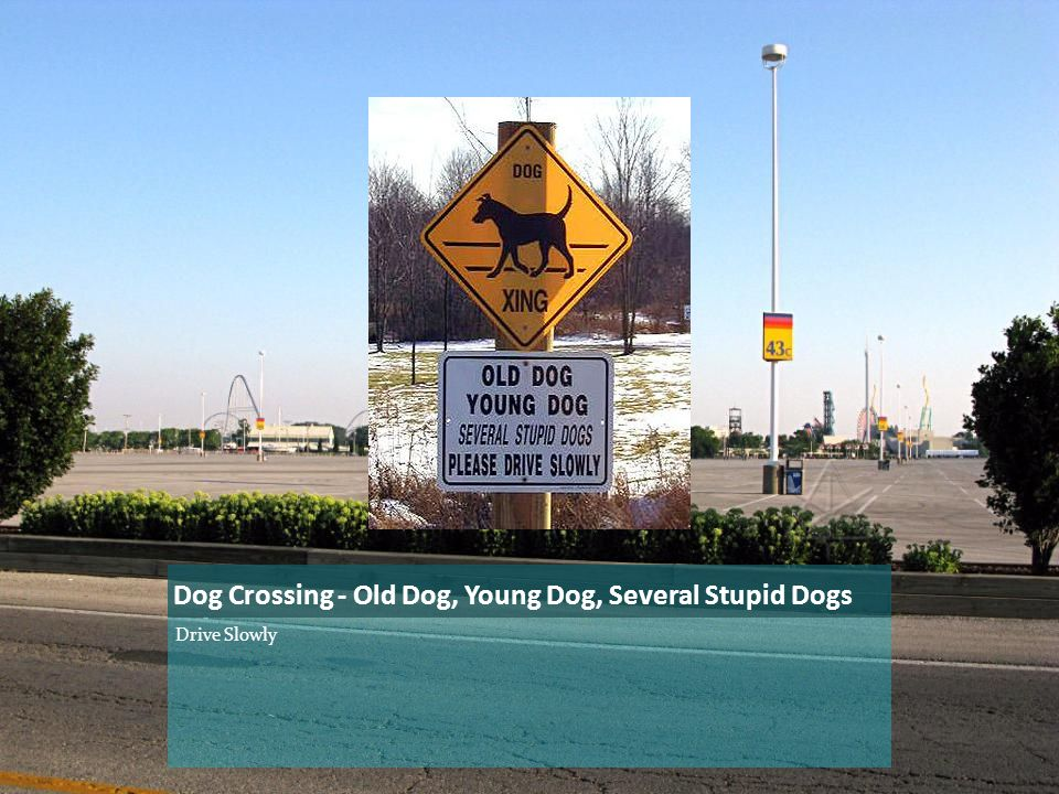Dog Crossing - Old Dog, Young Dog, Several Stupid Dogs Drive Slowly